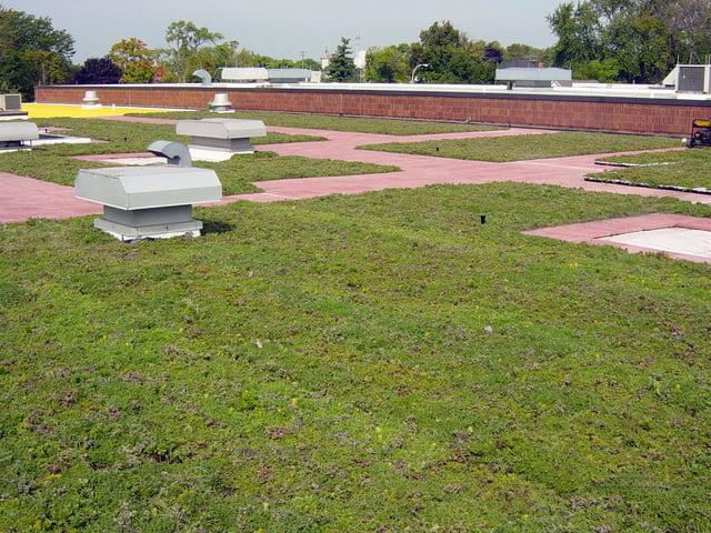 St Clair Vegetative Roof