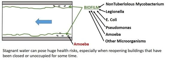 Biofilm contaminates stagnant water.